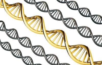 סלילי DNA